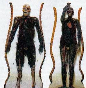 """Foto delle """" macchine anatomiche"""" del Principe di San Severo"""